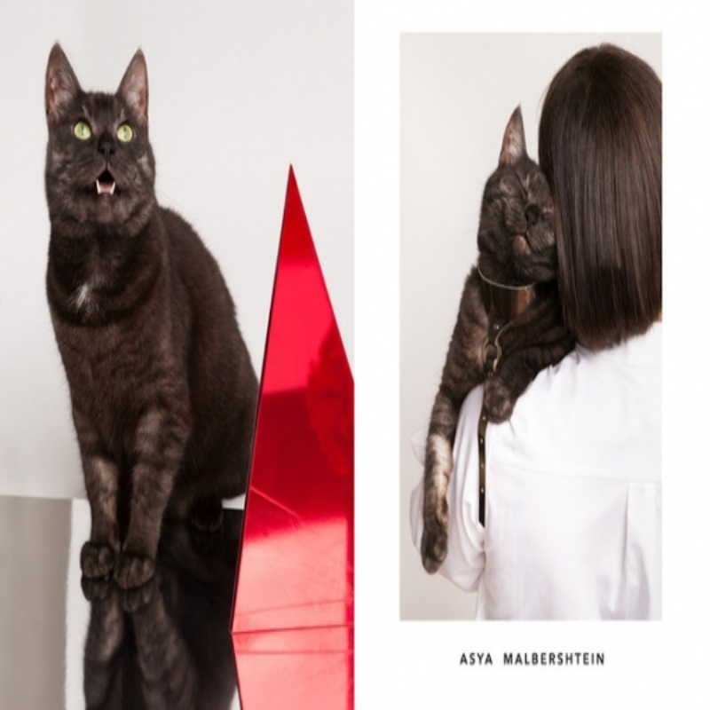Котики стали звездами рекламы Asya Malbershtein