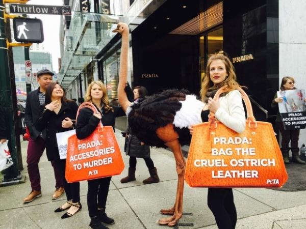PETA купила акции Prada, чтобы защитить страусят