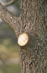 Как икогда обрезать деревья