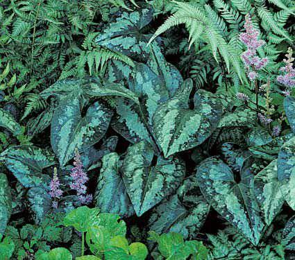 7тенелюбивых растений, которые украсят ваш сад