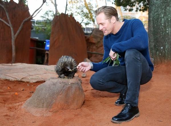 «Тарзан» Александр Скарсгард потискал животных в австралийском зоопарке