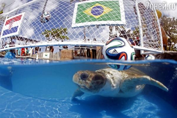 Самые известные животные-предсказатели по футболу
