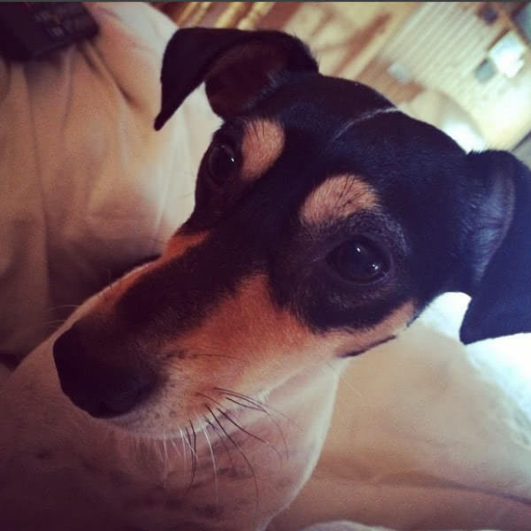 Умерла собака Жанны Фриске