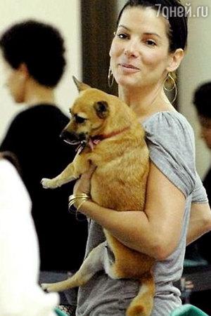 Дженнифер Энистон и другие знаменитости, которые готовы на любые жертвы из любви к животным