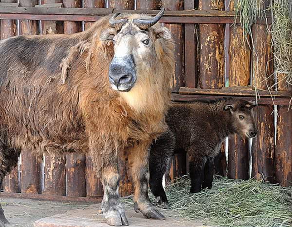 Милота дня: смотрим детенышей в Московском зоопарке