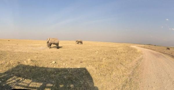 Рики Мартин взял семью и возлюбленного на сафари в Кению