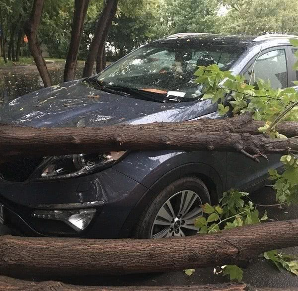 На машину Натальи Фриске упало дерево