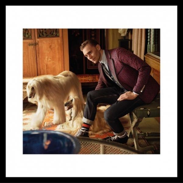 В новой кампании Gucci Том Хиддлстон снялся вместе с собаками