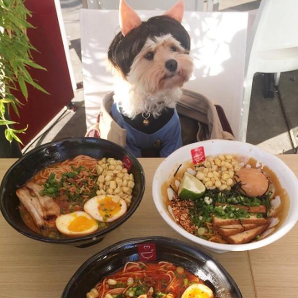 Бездомный пес голодал, а сейчас обедает в лучших ресторанах