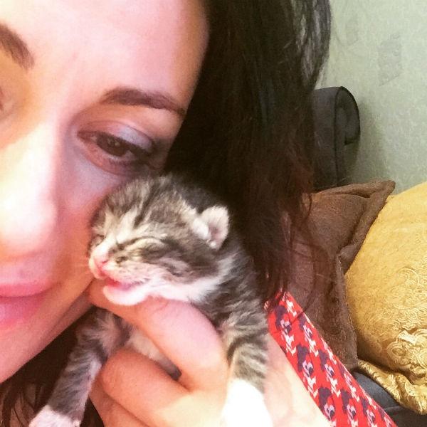 Котики правят миром: как живут любимцы Ковальчук, Варум и Друзя