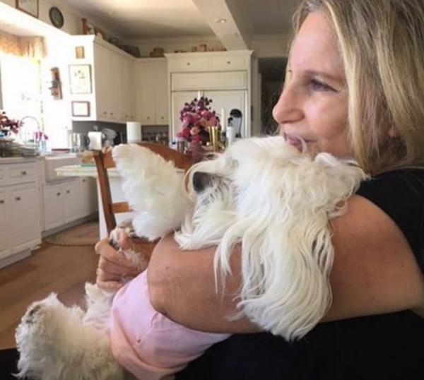 Барбара Стрейзанд оплакивает своего пса