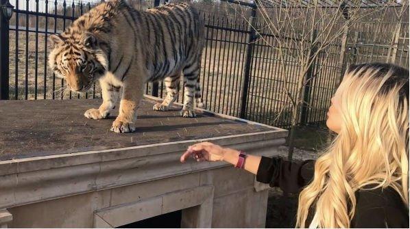 Виктория Боня заставила переживать фанатов, гуляя с тигром