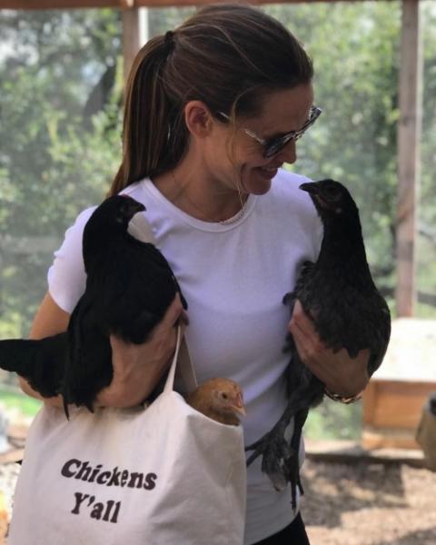 Дженнифер Гарнер выгуливает свою курицу на поводке