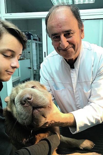Ай, не болит: кто лечит питомцев Кадырова, Орловой и Цой