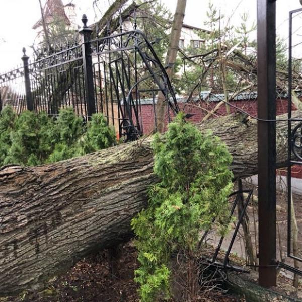 Галкин и Пугачева серьезно пострадали из-за урагана