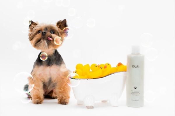 Бьюти-дайджест: от шампуня для собак от стилиста Ким Кардашьян до калькулятора загара