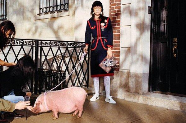 Люксовое свинство: 16 модных вещей для встречи китайского Нового года