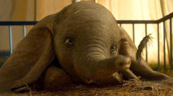 «Дамбо» лидирует: фильм об удивительном слонёнке взлетел на первое место в прокате