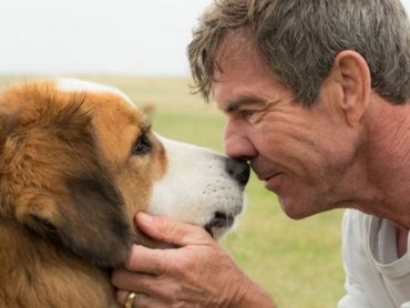 """When the sequel is also excellent as the original: """"a Dog's life 2"""": in the movie"""