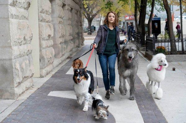 Когда сиквел также превосходен, как оригинал: «Собачья жизнь 2»: уже в кино