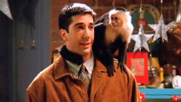 """Monkey Marcel from """"Friends"""" will once again star in the series"""
