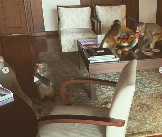 Ограбленные обезьянами: Эмилия Кларк отдыхает в Индии вместе с женой экранного возлюбленного
