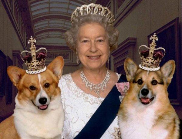 Любимые питомцы Королевы Елизаветы – корги